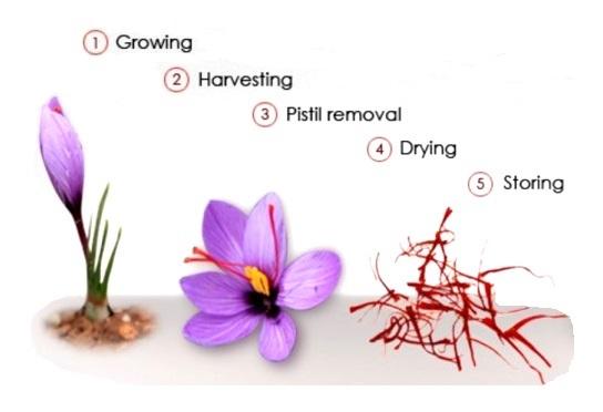 Saffron_Processes_diagram