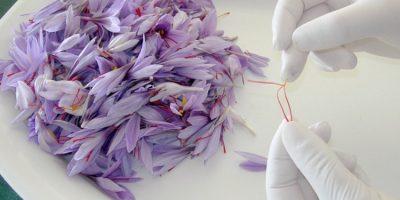saffron-4